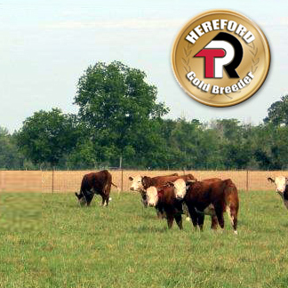 JKW Polled Herefords
