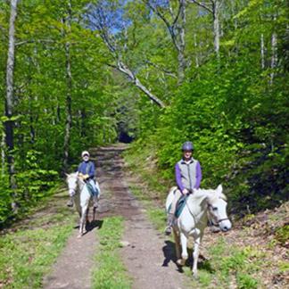 A Paso Fino Horse Farm