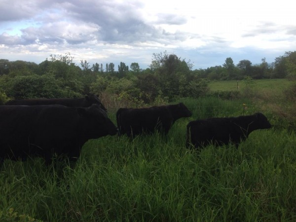 The McCulloch Family Farm