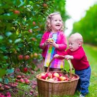 Pumpkin Picking & Apple Picking
