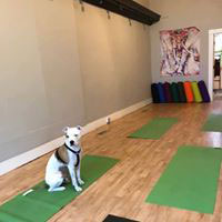 Yoga Path for Healing in Catskill