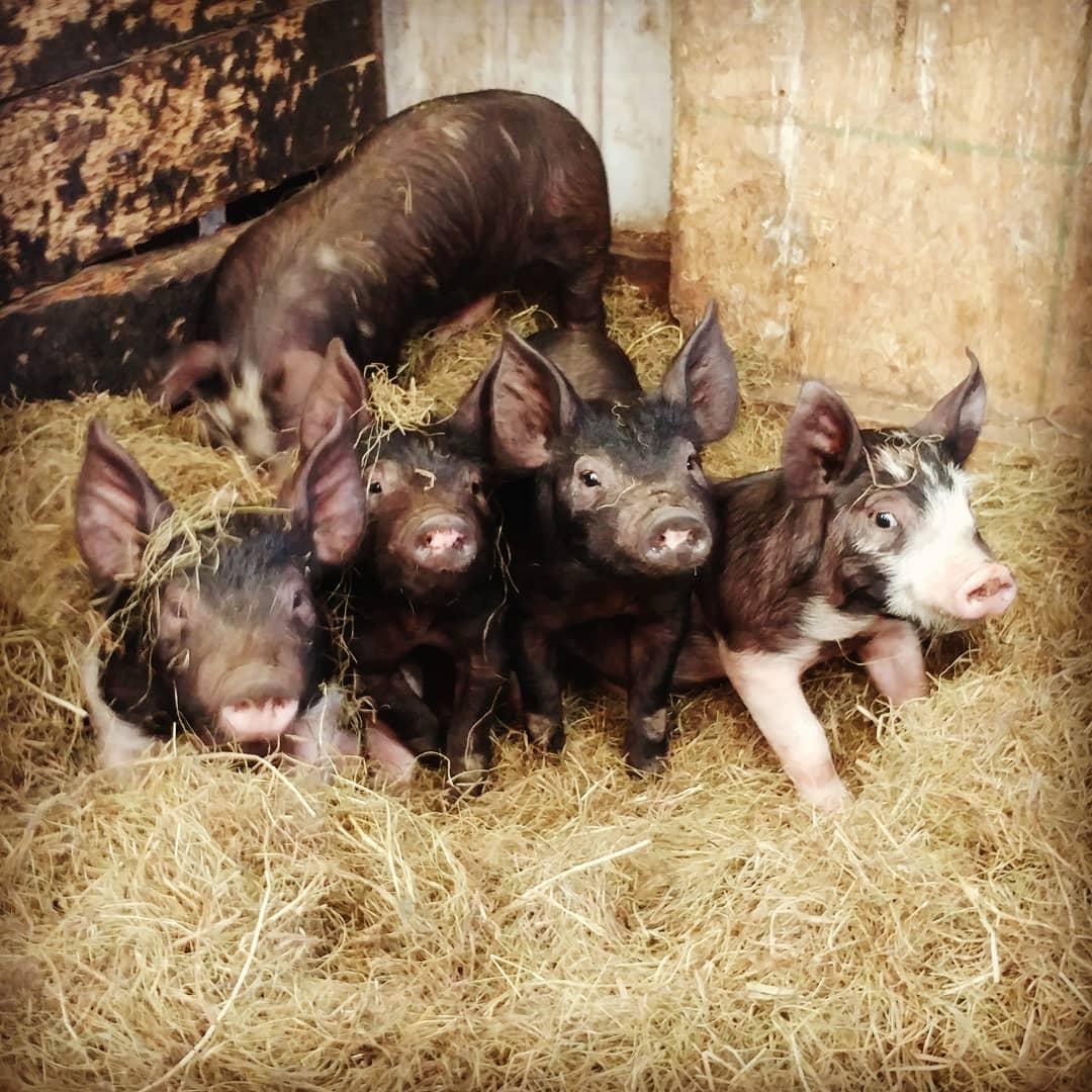 Johnk Family Farm