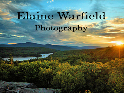 Elaine Warfield Photography in Jewett