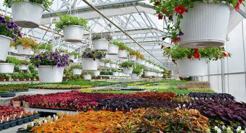 Sustaining a Gardeners' Destination for Over 60 years in Freehold, NY